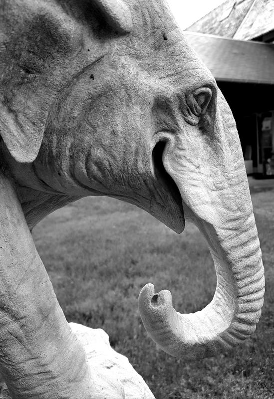 Sculpture sur pierre de Caen - Sculptures animaux - Morgan Roulland
